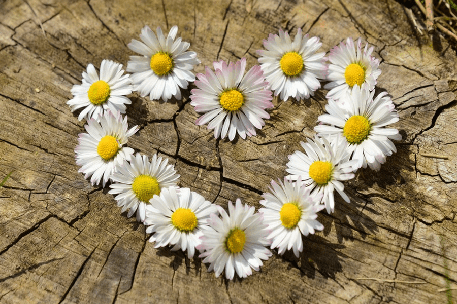 Why The Journey Is More Rewarding Than The End Result daisies
