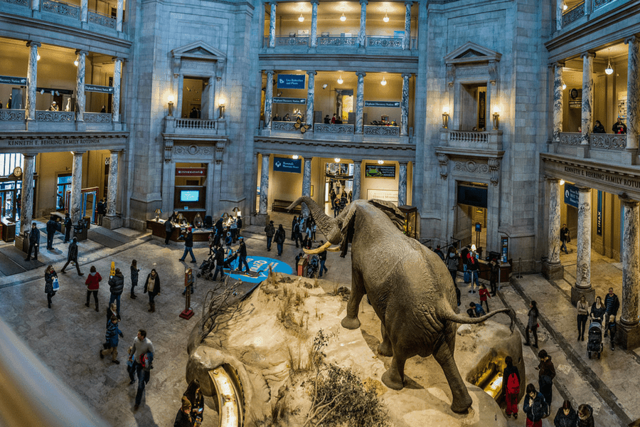 washington dc museums for kids
